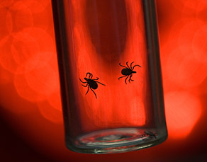 Protect Yourself and Your Family from Lyme Disease - Virtua Article